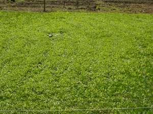 It's grass!